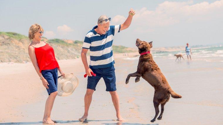 Dog-Friendly Holiday Parks UK | Hoburne Holidays