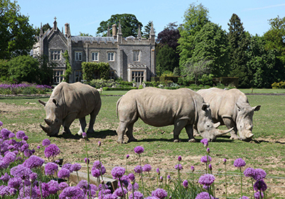 Ownership Cotswold Rhinos 400x280