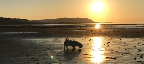 Onwnership dog friendly beaches 1440x382